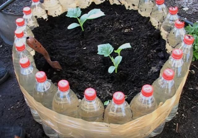 这个花坛不用红砖水泥砌,捡25个矿泉水瓶围一圈,养花种菜都行