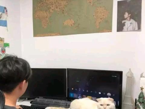 男子沉迷网络游戏,看了一眼旁边的猫咪后,吓得立马关电脑