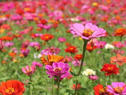 喜欢在家中养护花卉,就选择花色艳花期长,观赏价值高的5种花卉