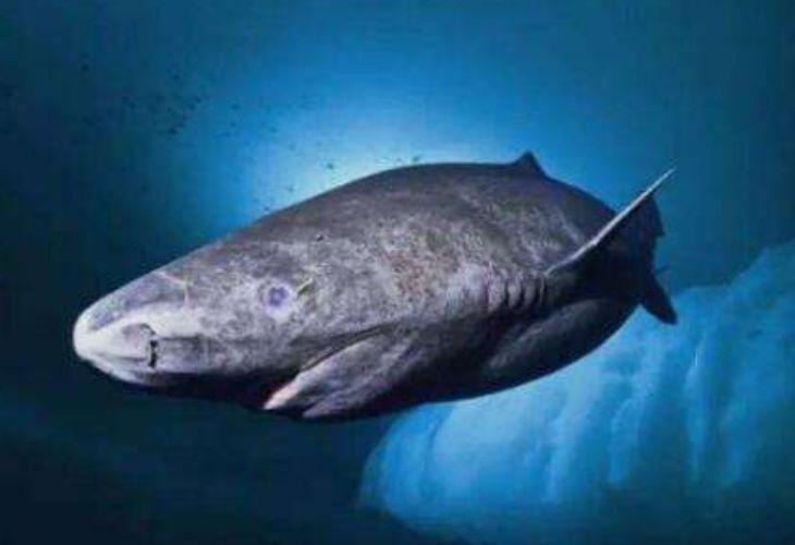 地球上最长寿的脊椎动物,156岁才算成年,等一个世纪才能有伴侣