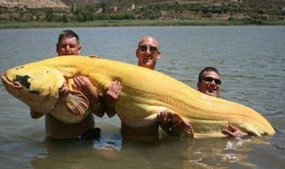 男子河里游泳,却发现一条大鱼,捞上大鱼后,他噗嗤笑了!