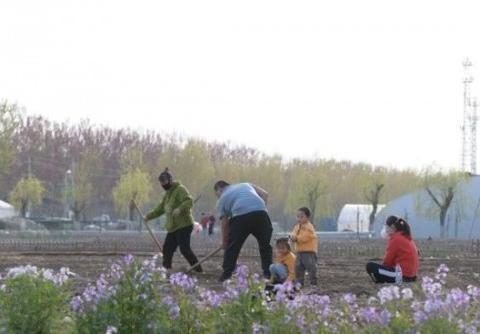 大爱城生态农场丨春余草木繁,耕种满田园