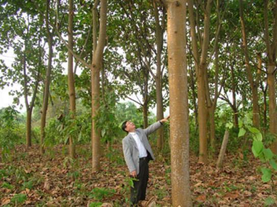 世界上最轻的树,小孩都能轻松扛起,外国人用来造木质飞机!