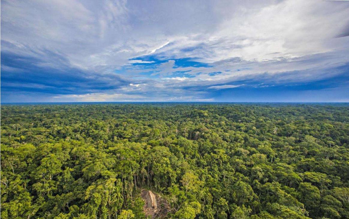热带雨林即将消失?科学家预警:未来50年内亚马逊将出现大草原
