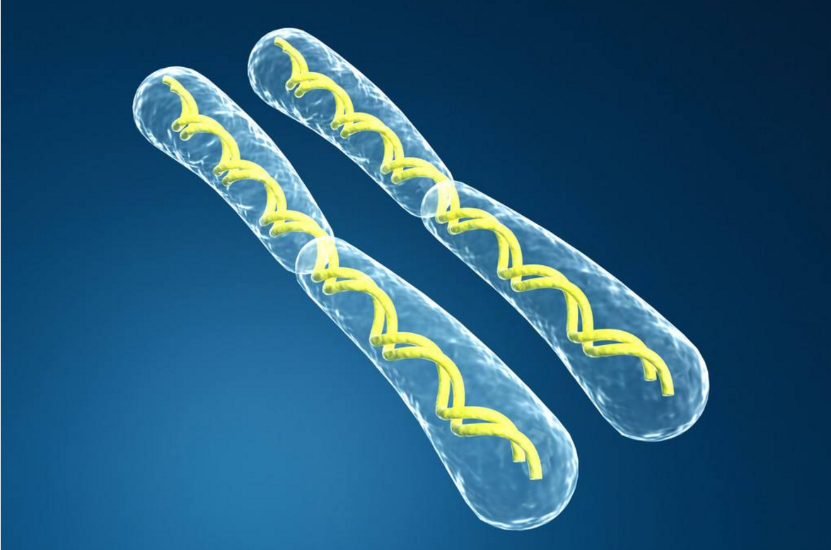 究竟是什么限制了人类永生?生物学家给出一个观点
