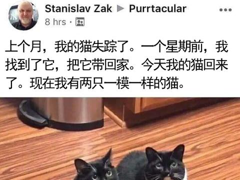 猫咪走丢一个月,一周前找回,后来原住猫自己回来了