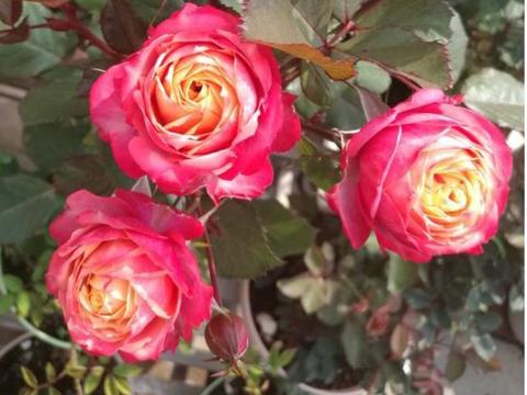 4月底,旧爱入梦,思念不停,三大星座月老相助,找回一生幸福