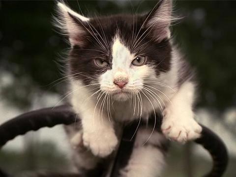 2个月大的幼猫新到家不吃不喝?新环境的饮食习惯培养很重要