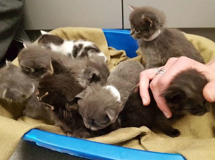 小猫在零下20℃中受寒,男子第一次发现没有救助,第二次才带回家