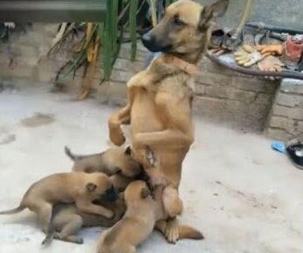 男子发现自家狗子蹲坐在一旁,正诧异间,低头一看笑喷了