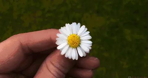 小雏菊元素单品丨家花中的优衣库,野花中的爱马仕