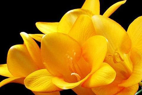 喜欢在家里养花,那就养盆花大色艳的,开花漂亮绚烂夺目,美极了