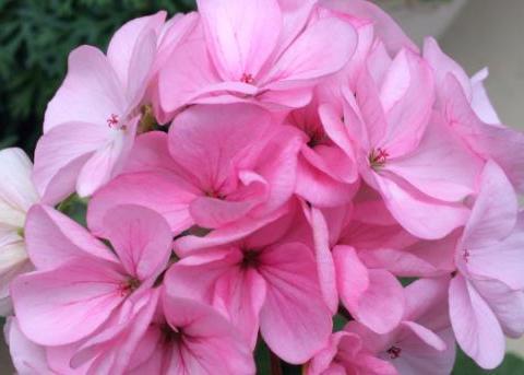 喜欢在家中养护花卉,就选择开花繁多,花色艳丽丰富的5种花卉
