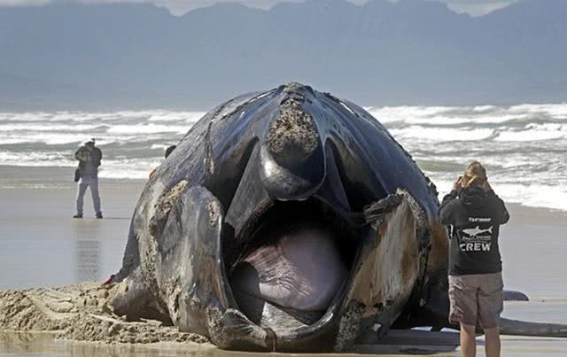 农村渔夫海边发现黑色怪物,吓得拔腿就跑!