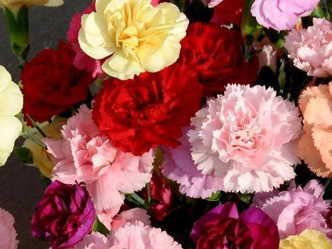 喜欢在家中养护花卉,就选择3种花色艳丽,花期长,养护漂亮的花
