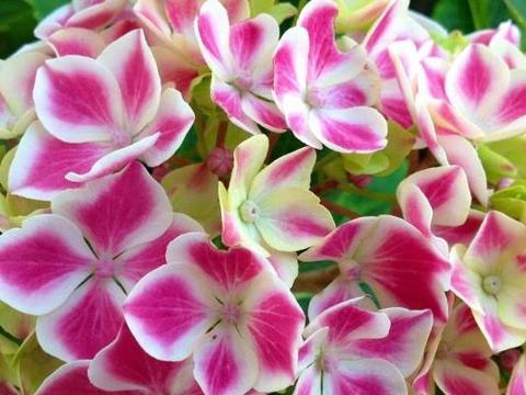 喜欢在家中养护花卉,就选5种花色多样,花期长,开花爆盆的花