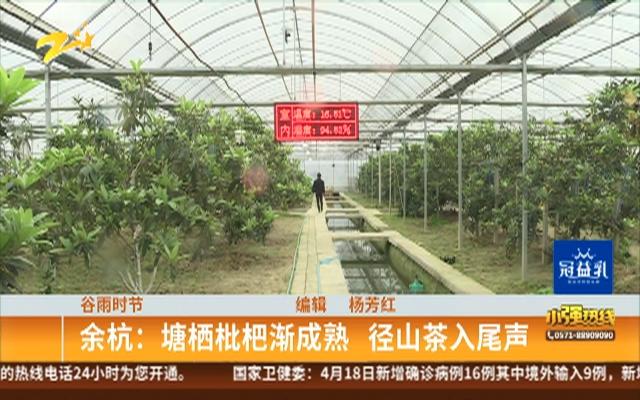 谷雨时节:余杭——塘栖枇杷渐成熟  径山茶入尾声