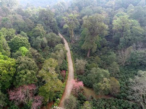 景迈山古茶林文化景观能成为世界遗产吗?