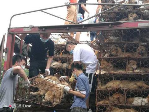 玉林狗肉节将近,爱狗人士再次拦截运狗货车,解救近千只狗狗!
