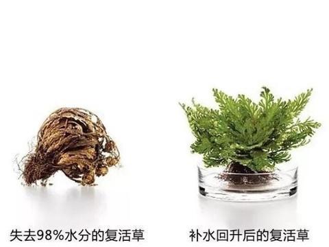 面膜测评-Bb复活草修护补水面膜