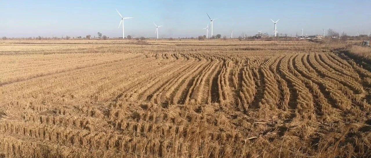 粳稻主产区稻谷价格短暂升温,售粮时机别错过!