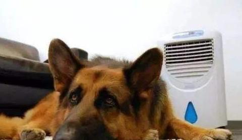 酷暑来袭 狗狗易出现过敏性皮炎 预防是关键