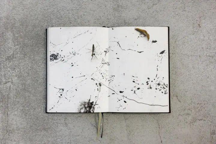 被誉为世界上最神奇的一本书,被大英图书馆收藏,作者是只昆虫