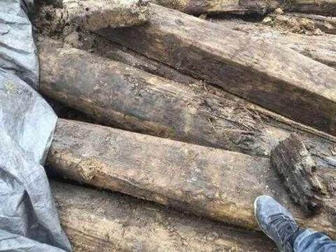 渔民发现水上飘来一船木头,刨出木屑,居然跟黄金一样!