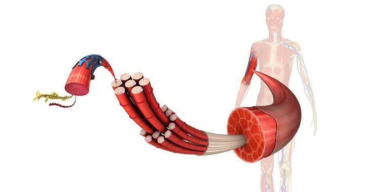 丙酸睾丸酮的作用与用途