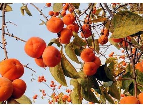 寒露过,秋夜凉!用这水果煮粥喝,它可浑身是宝,健脾润燥又营养