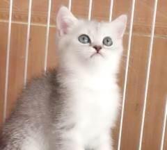猫咪不愿意剪指甲,主人拿出菜刀后秒怂,猫:算你狠!
