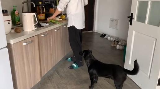 这种狗从不拆家,更不会乱拉乱尿,懂事得让人心疼,你愿意养它吗