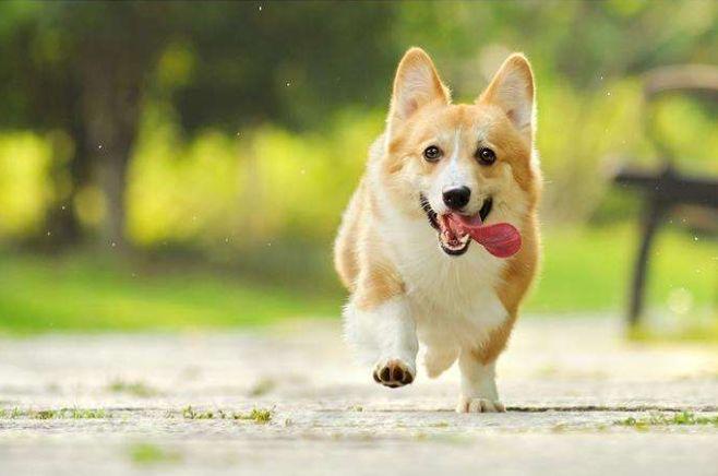 如果给你机会,以下4种狗狗你会选择谁?第二种给女友惊喜