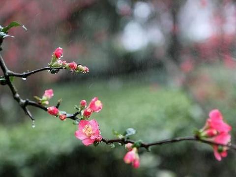 现代诗《丝丝小雨》丝丝小雨,小雨丝丝,自然的增湿剂