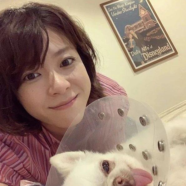 上野树里13岁的爱犬手术成功:它相当于人类的80岁