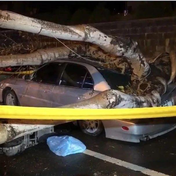 路边树木倒塌压死路过女子 台南市长说话了