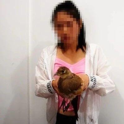 """小心!镇雄龙井社区一女子为吸引眼球发布""""野鸡""""视频被处罚!"""