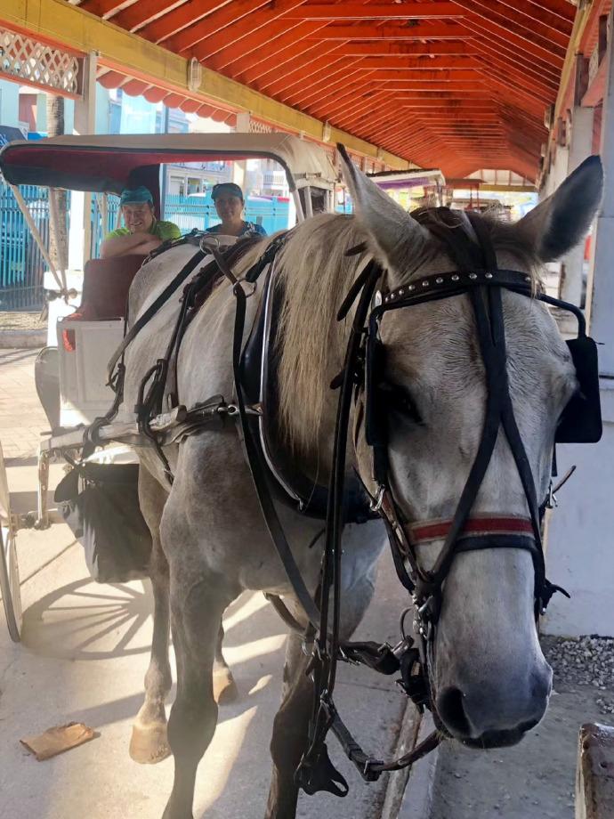 环游加勒比(4)乘马车游拿骚