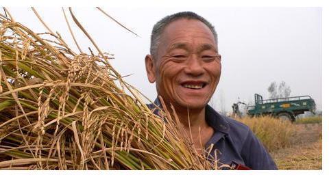 稻价上涨乏力,还会上涨吗?能达到多少钱一斤?附:最新稻价!