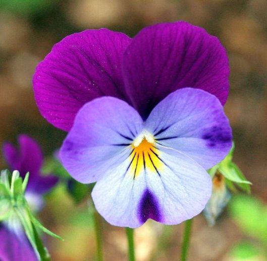 """6月天降大喜,4生肖运势""""大红大紫"""",添丁添财,生活幸福甜美"""