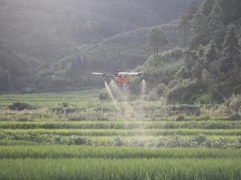 水稻轻简化栽培问题:二化螟抗性重,虫口夺粮需综合防治