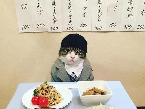 日本博主将小猫打扮成人样拍下这些照片,10万网友大呼太萌了!