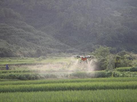 水稻轻简化栽培问题(二):二化螟抗性重,虫口夺粮需综合防治