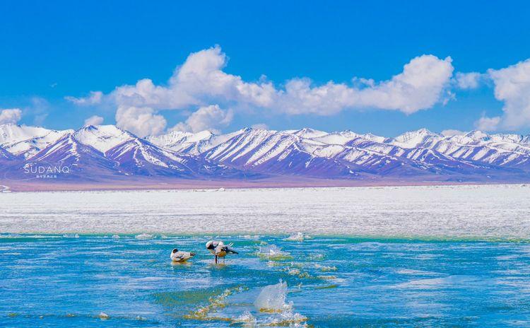 西藏圣湖能洗涤心灵吗?它作为国内第三大咸水湖,美得令人沉醉