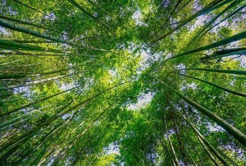 国内值得一去的10大竹海,邀您过清凉竹林盛夏