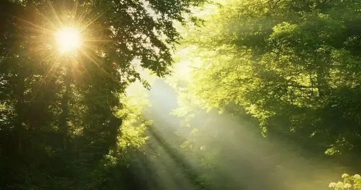 清晨醒转,窗外一片阒静,满院落的阳光,丰满而又热烈