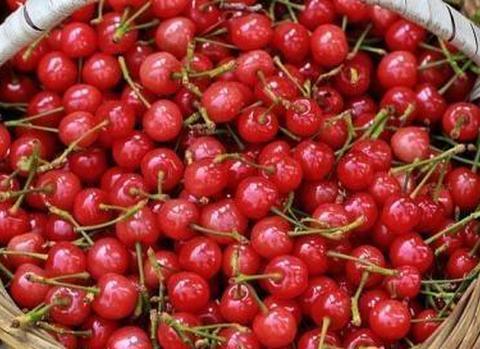 车厘子跟樱桃,是同一种水果吗?爱吃水果的你,买之前要分清楚