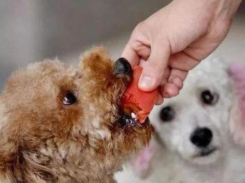 """狗狗可以吃什么""""人食""""?想要狗狗好,赶紧get这份食物红黑榜"""