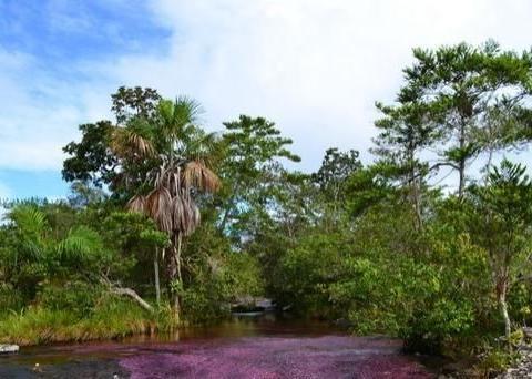 世界最美的河流,七彩斑斓的彩虹河,被誉为'魔幻圣地'