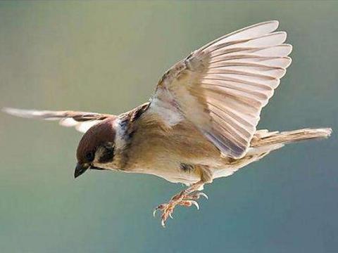 为什么捡来的麻雀永远都养不活?多年研究科学家终于发现秘密